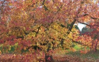November News – Autumn Leaves