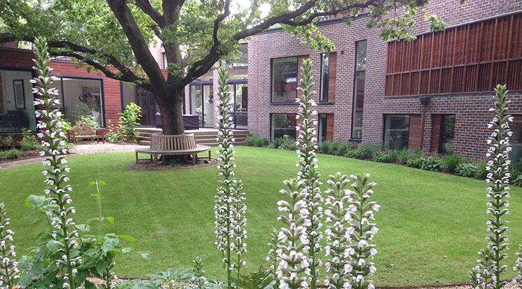 Urban Garden Planting Design