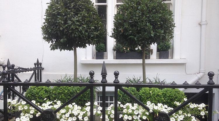 Urban Garden Kensington