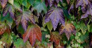 November News – Colours of Autumn