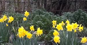 February News – Spring Flowers