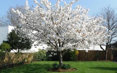 April News – Blossom everywhere