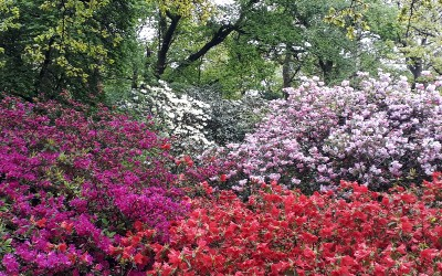 May News – Glorious blooms
